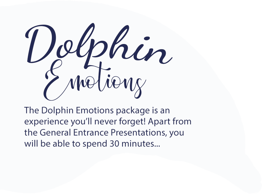 Dolphin Emotions package at Mediterraneo Marine Park Malta