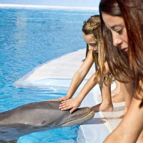 Girls touching dolphins