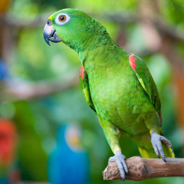 Parrots at Mediterraneo Marine Park Malta