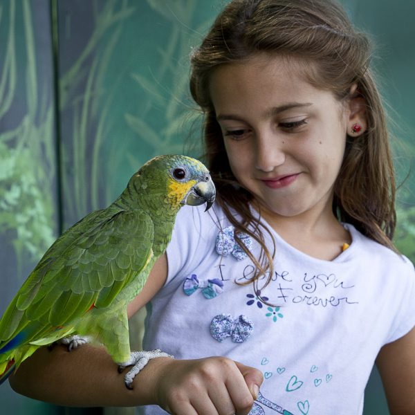 Child with Parrot