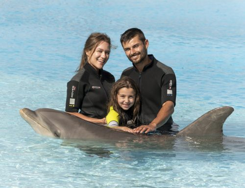What to do at Mediterraneo Marine Park this Summer!