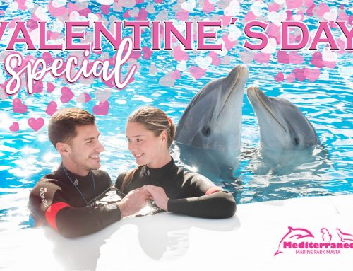 Valentine's Special Promotion – Coupon Code: valeDE21